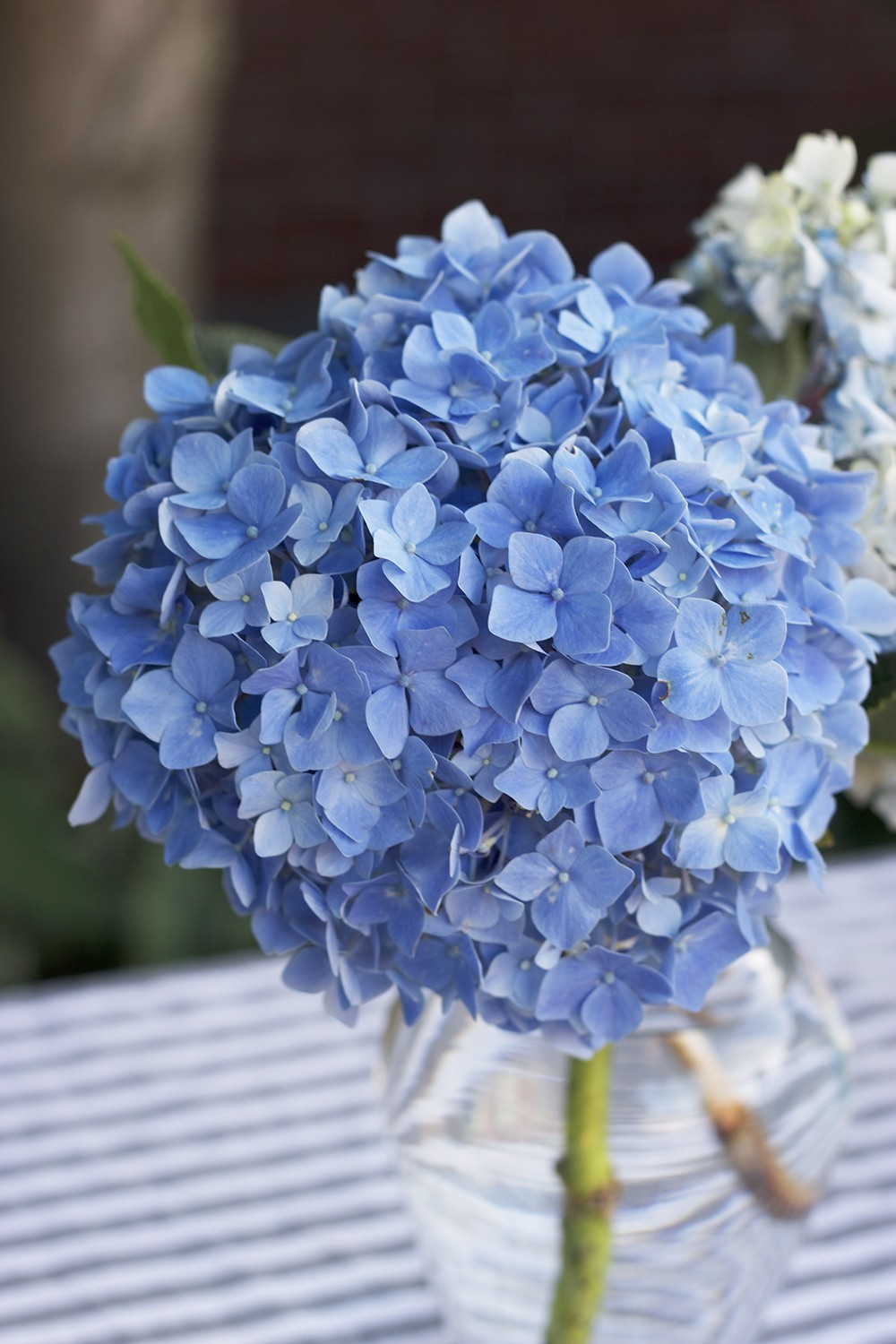 blue and white hydrangea flower decorations for a lamb themed baby shower