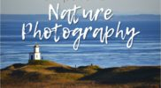 DIY Nature Photography – 9 Beginner Tips