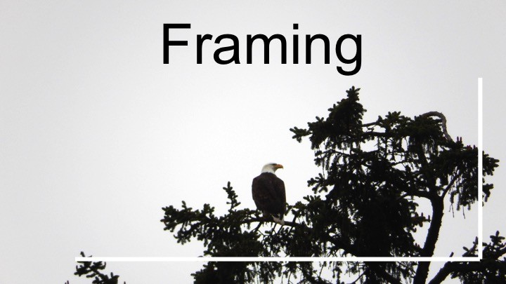 Frame your photo: Framing & 9 basic picture taking tips for DIY nature photography beginners. Advice for what to keep in mind when taking a photograph outdoors + great starter camera.