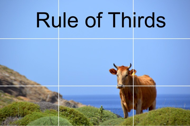 Use the rule of thirds: 9 basic picture taking tips for DIY nature photography beginners. Advice for what to keep in mind when taking a photograph outdoors + great starter camera.