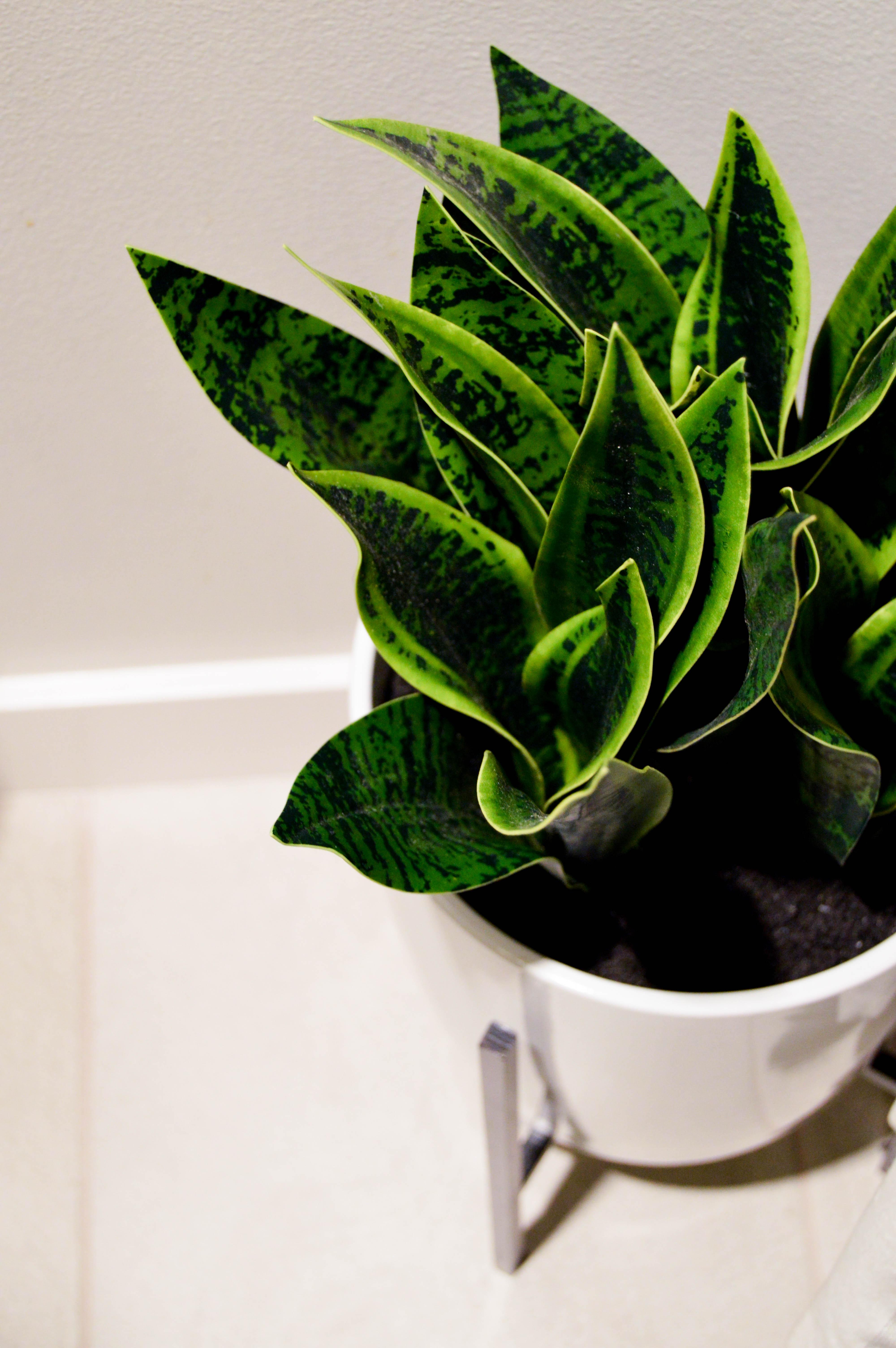 Faux or real plants: Bathroom Summer Refresh